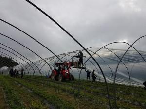 aranfarming-maasikakasvatus14